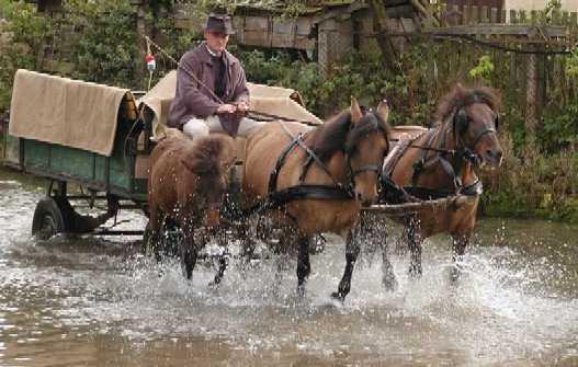 Huzule mit Wagen im Fluss